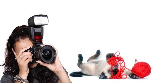 how to photograph your cat